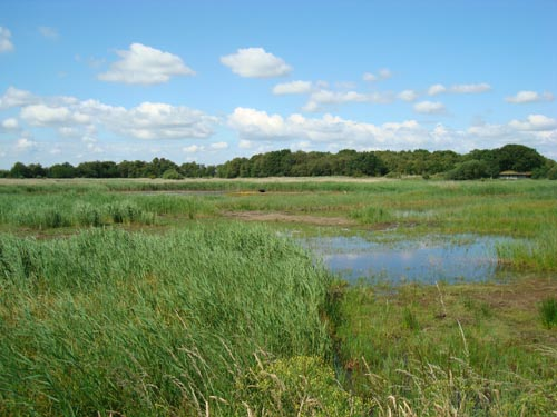 View of Hickling Broad - reed beds