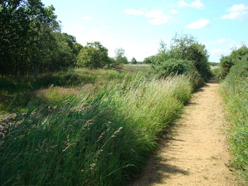 Hickling Broad Walk