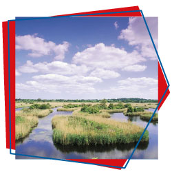 Nature on the Broads