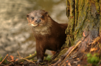 Rare and Unusual Norfolk Wildlife to Look Out For