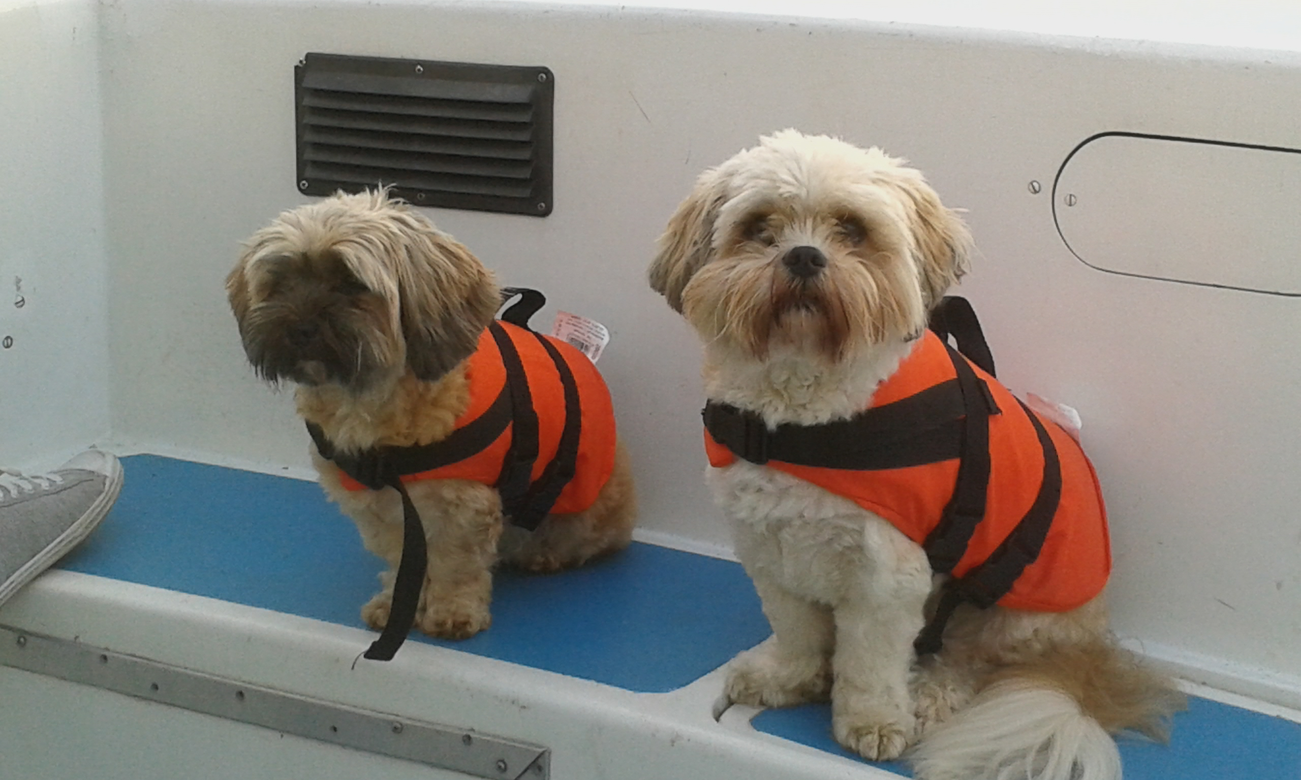 Looking for a place to take the pooch? Here at Richardson's we have Pet Friendly Boating Holidays!